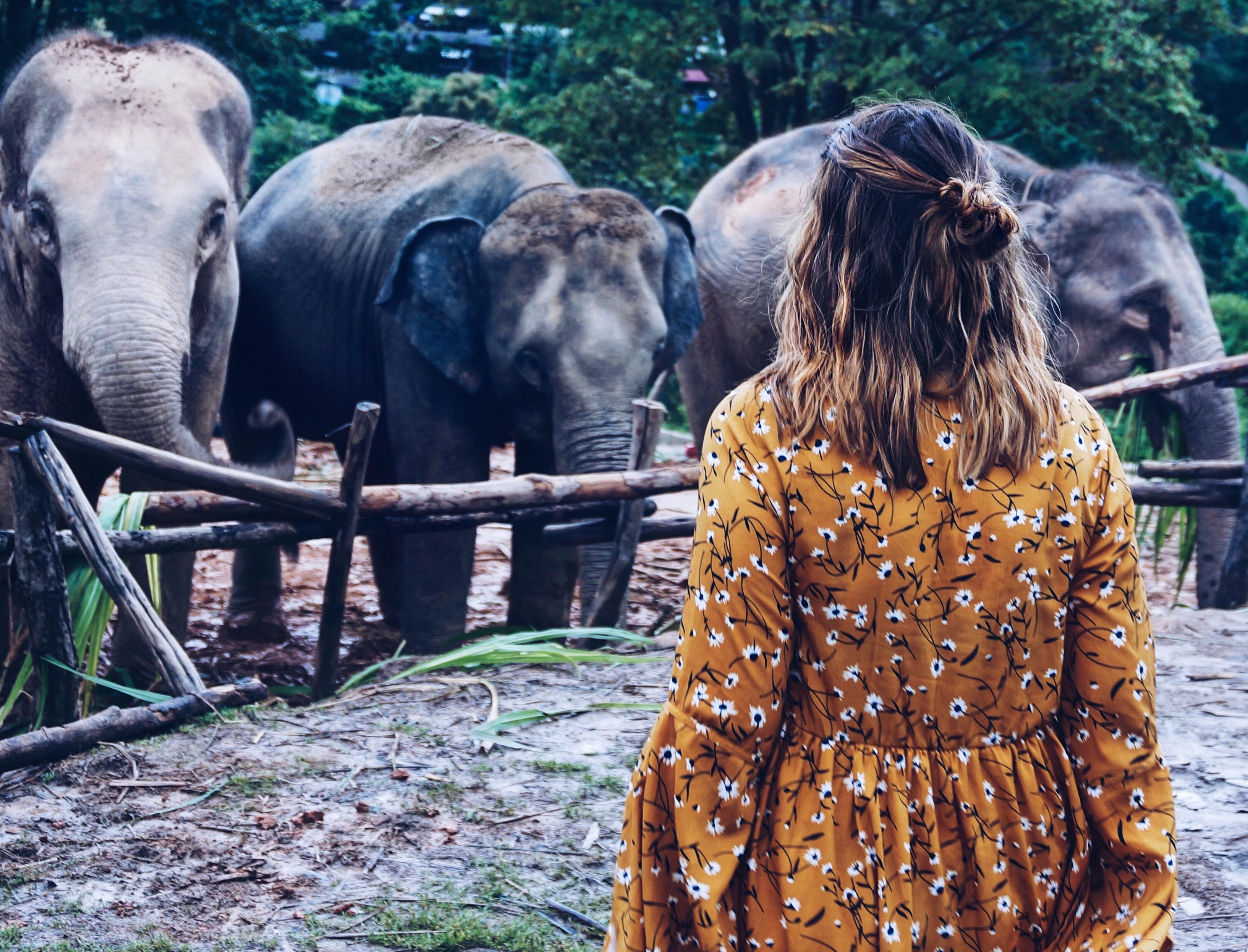 Elefantencamp in Chiang Mai, ethisches Camp, Thailand, Frau vor Elefanten