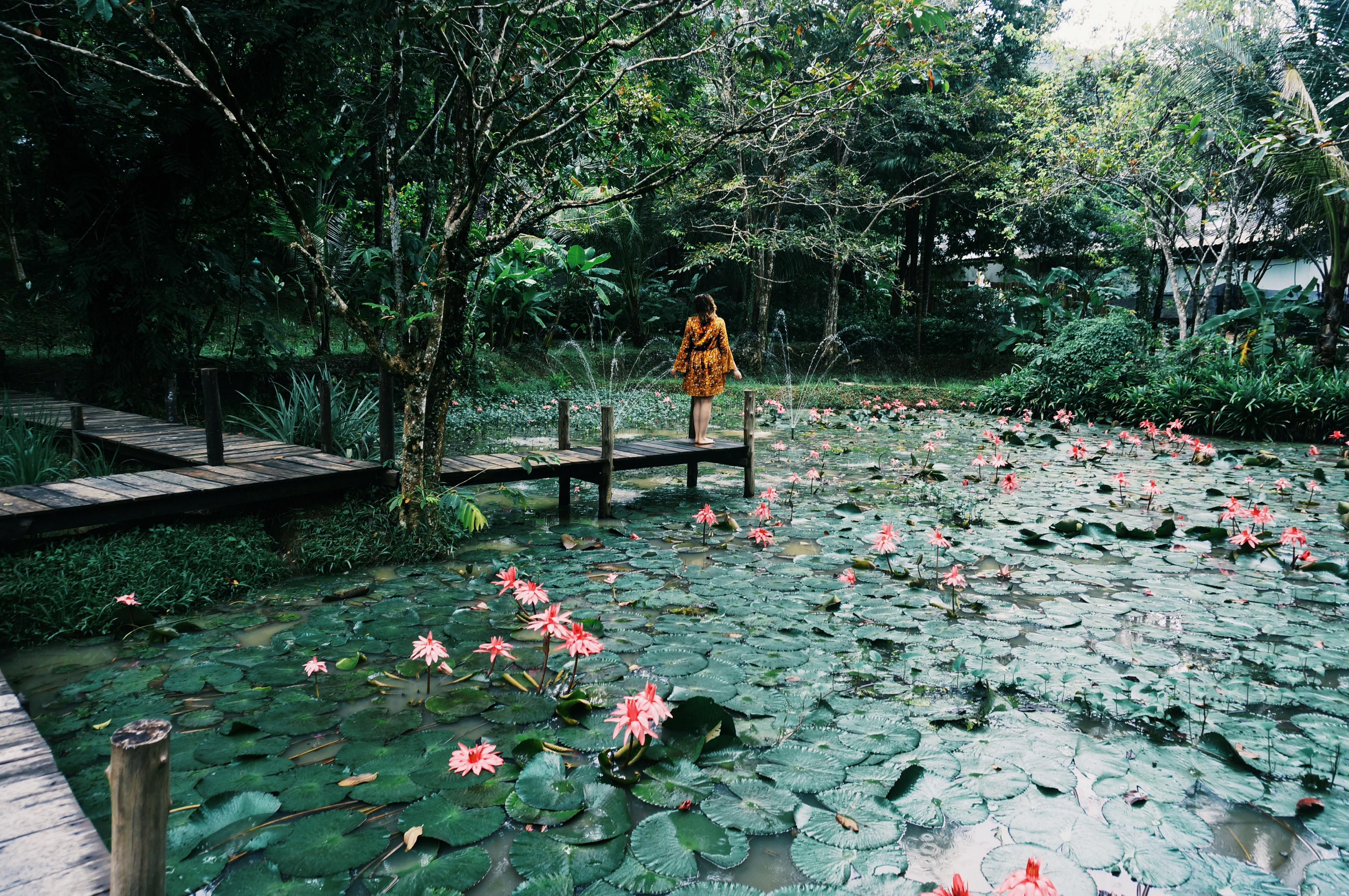 Traumhotel in Koh Yao Noi Thailand, Blick aufs Meer, Seerosenteich