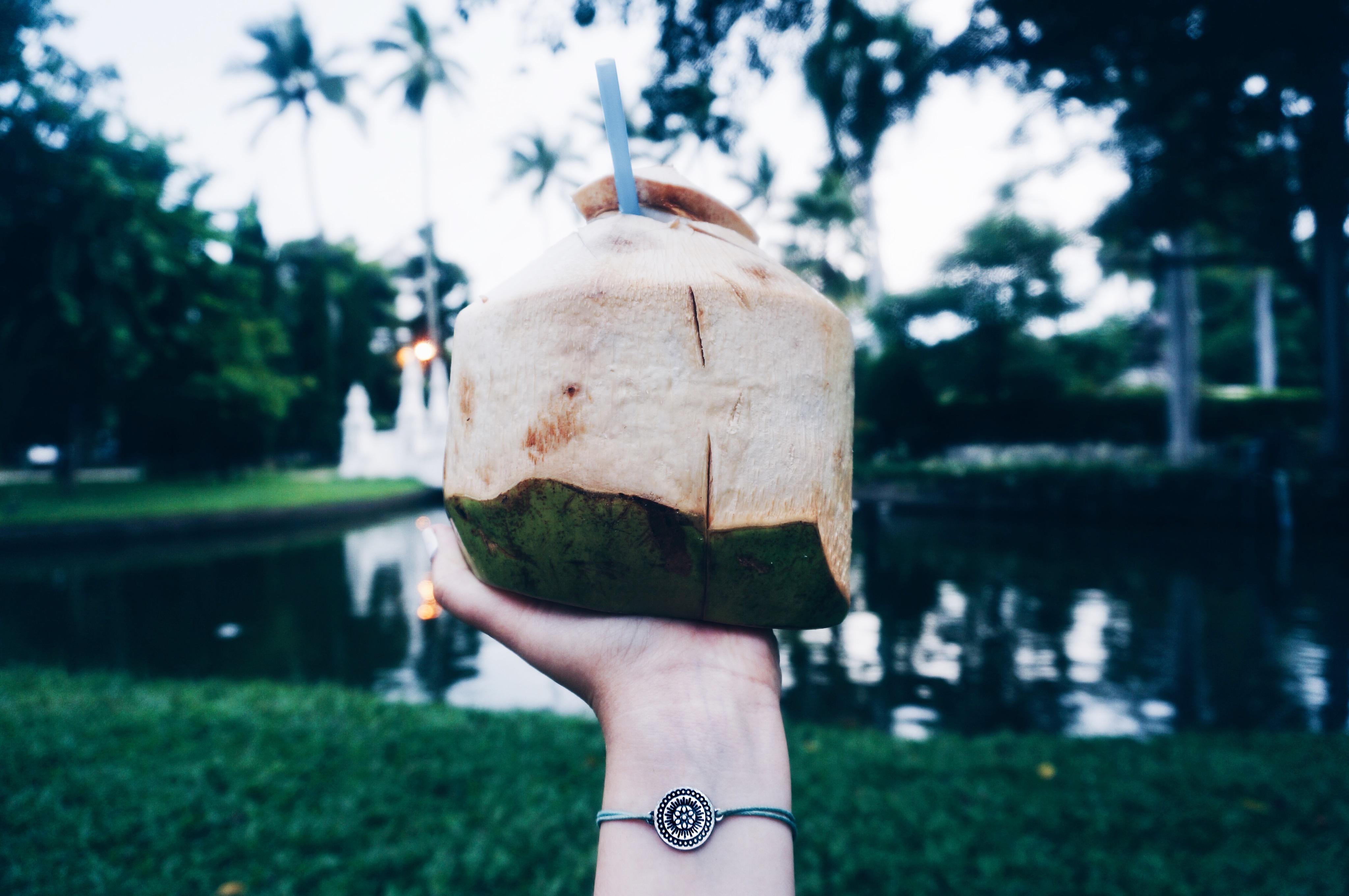 frische Kokosnuss in Thailand, Chiang Mai