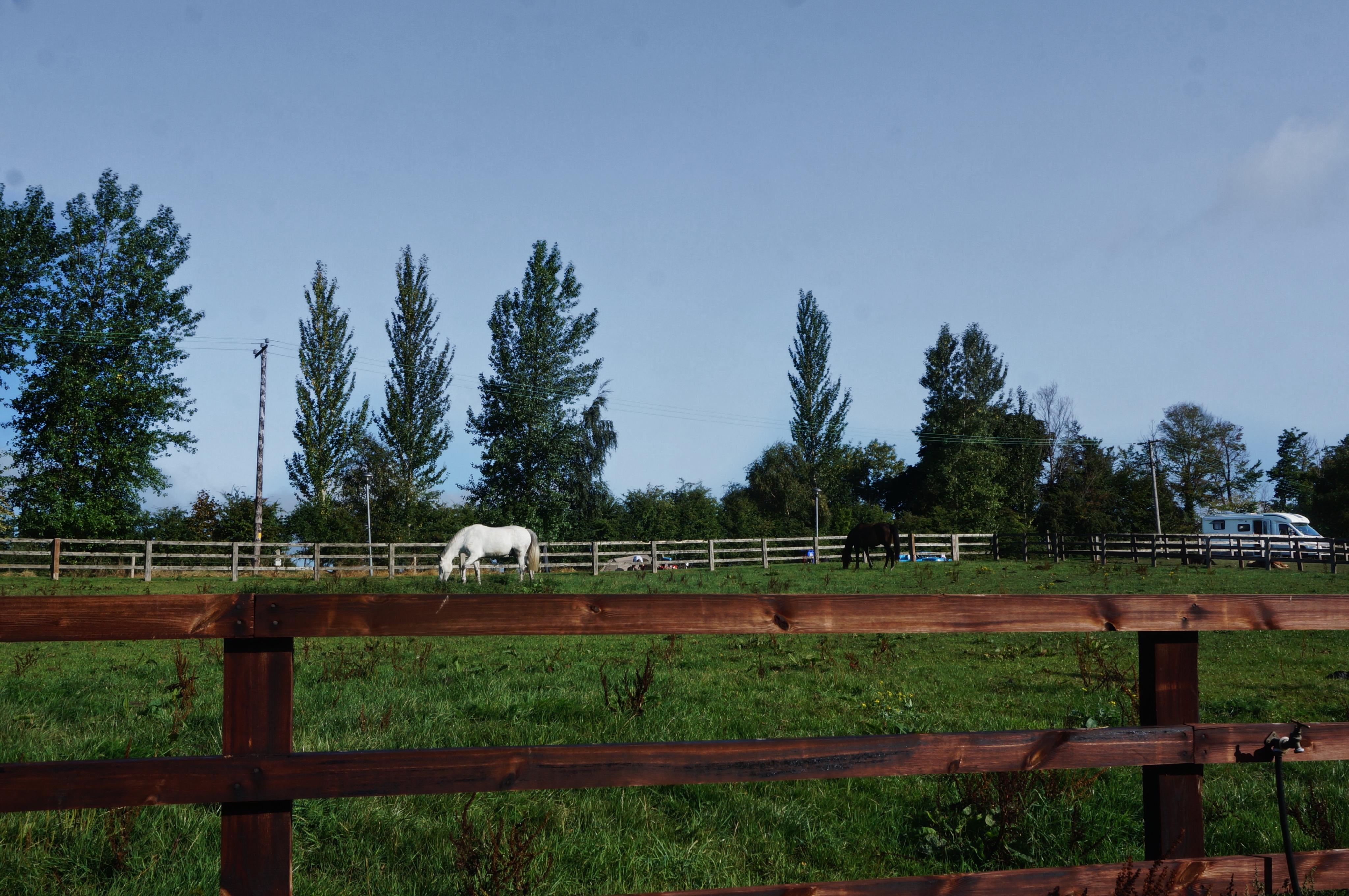 Campingplatz Irland, Pferdekoppel