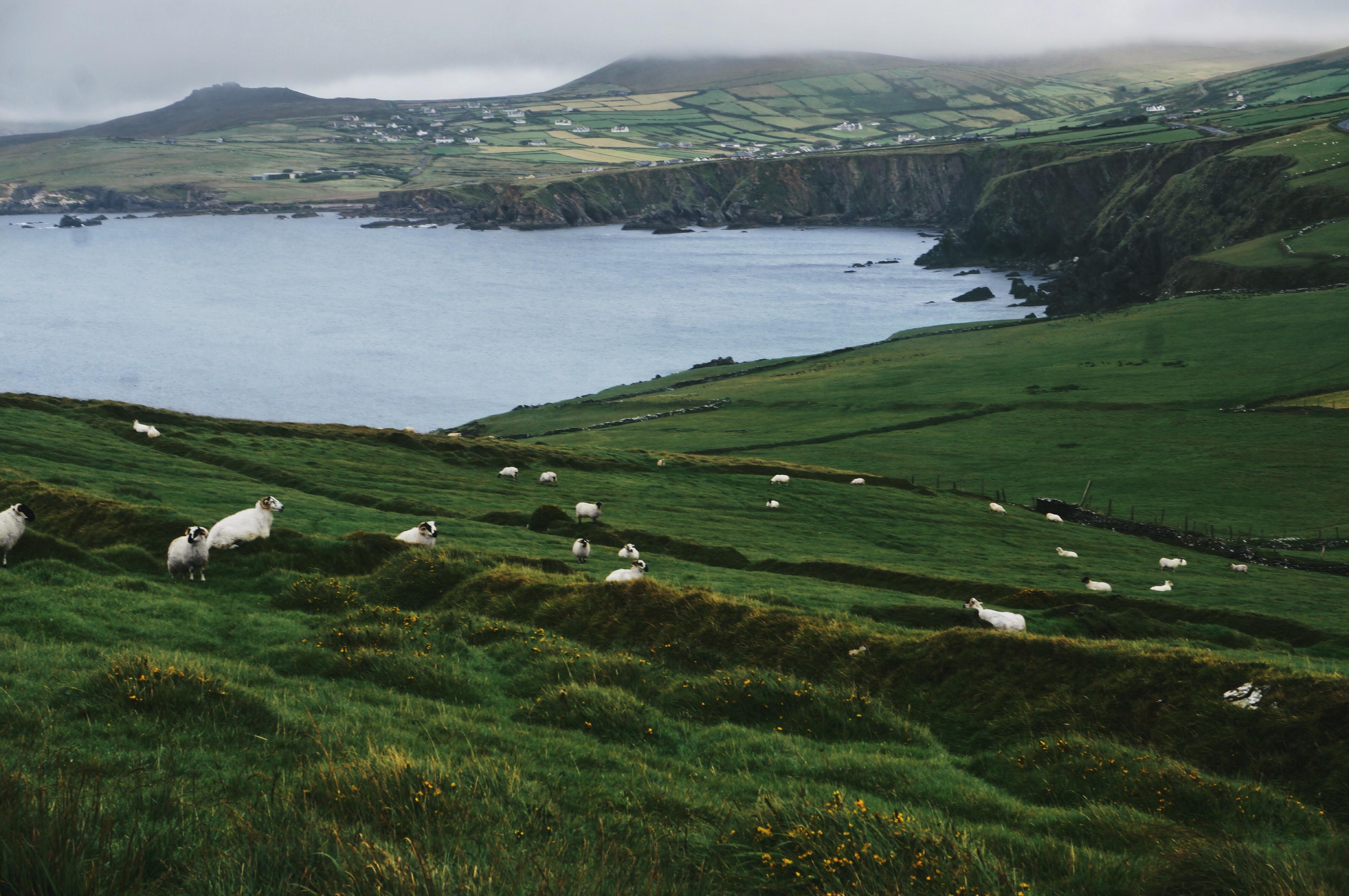 Irland, Sehenswürdigkeiten, Highlight, Klippen Cliffs, Regenjacke, Abenteuer, Schafe