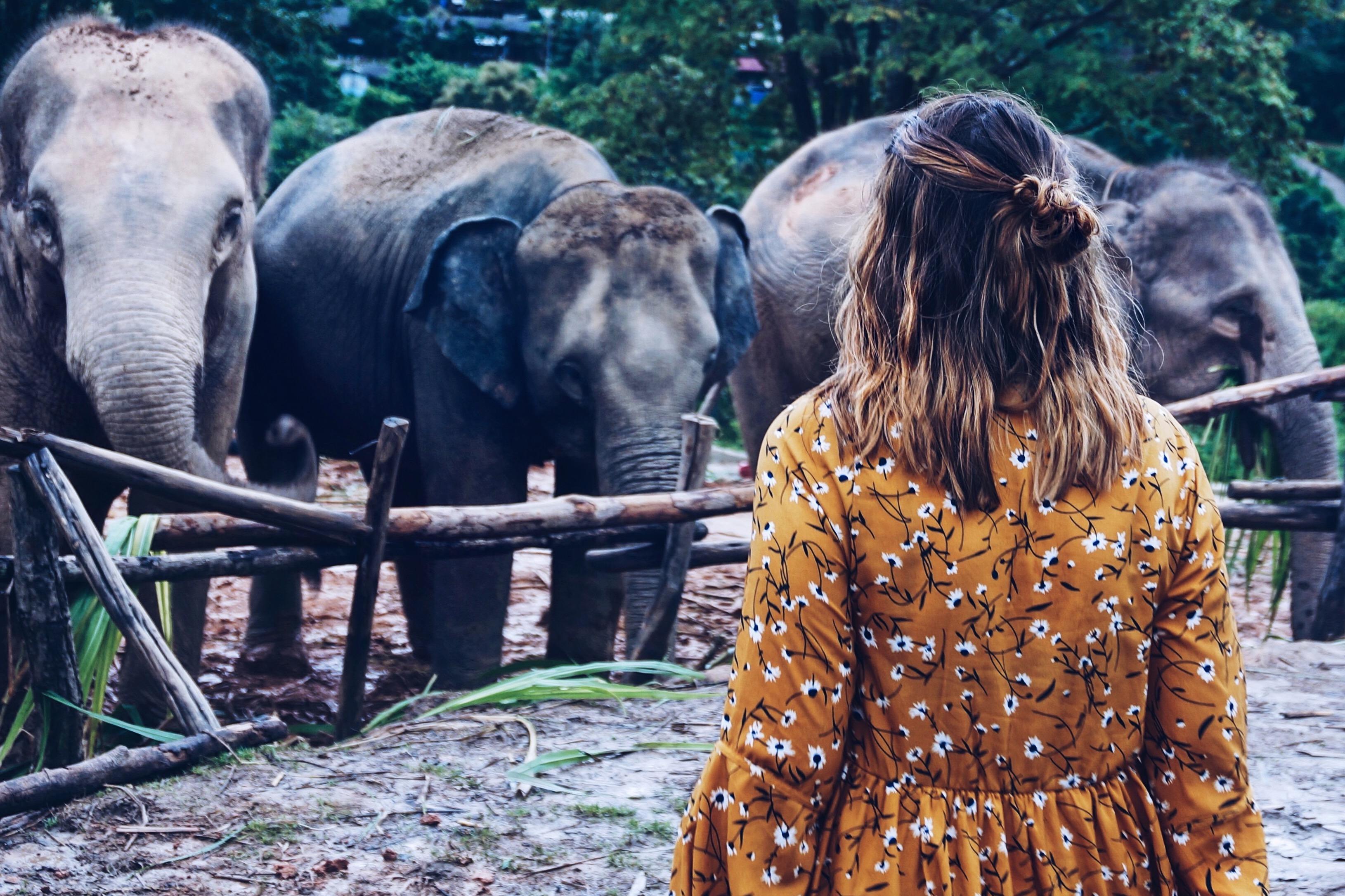 Elefanten sehen ethisch Probleme Thailand Asien