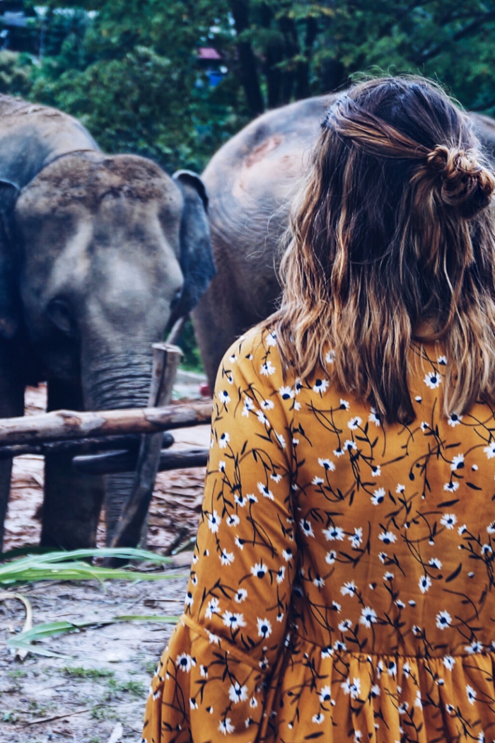 Elefanten sehen in Chiang Mai | ein vertretbarer Weg