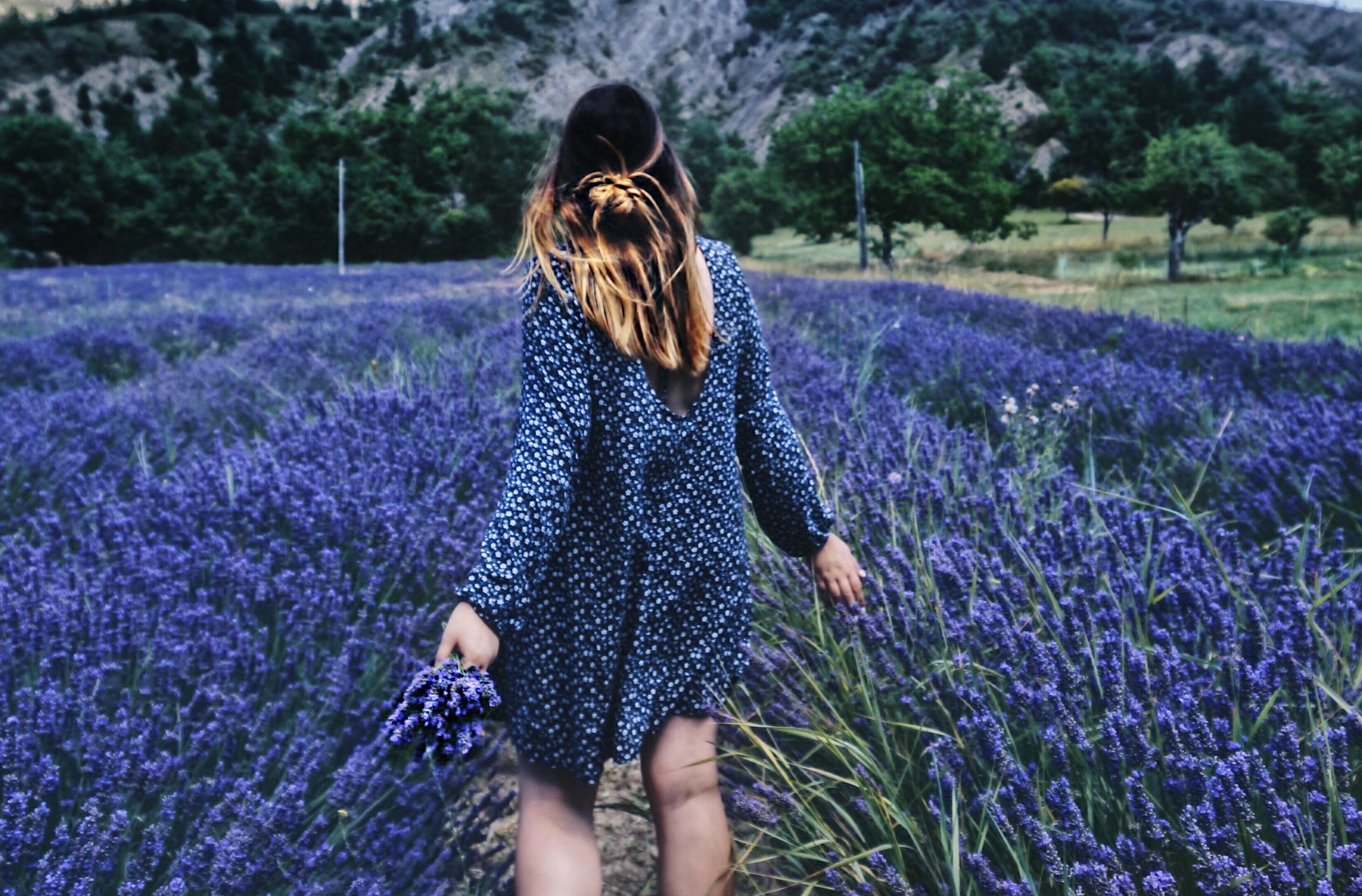 Reisen zum Lavendel, Lavendelfelder in der Provence, Frankreich, Felder, Abenteuer, Reiseziele Europa