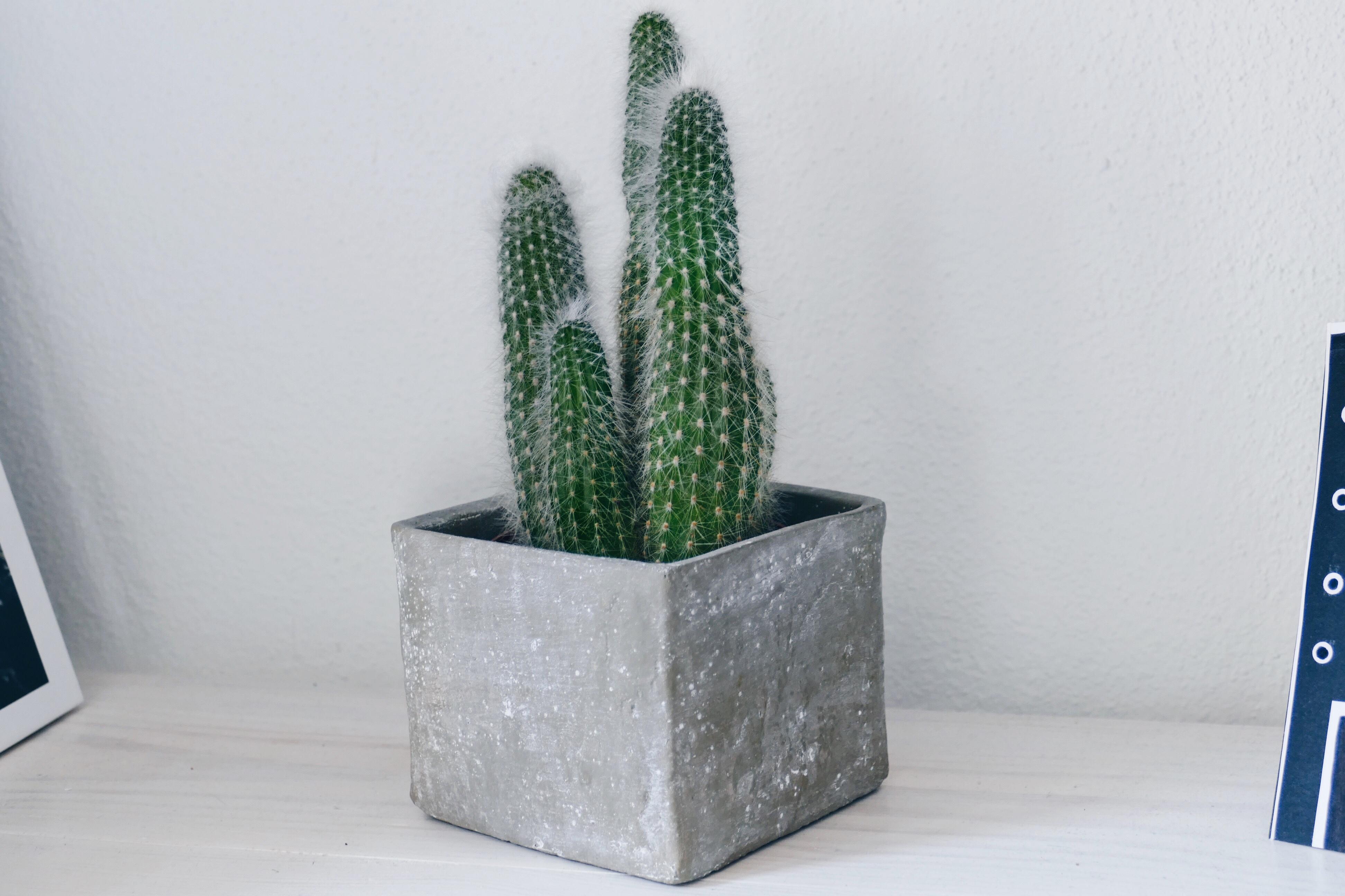 Geschenke im Kaktus-Stil – tolle Kaktus Geschenkideen