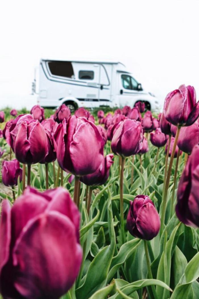 Wohnmobilreise durch ganz Holland – Nordsee, Tulpenblüte und besondere Städte