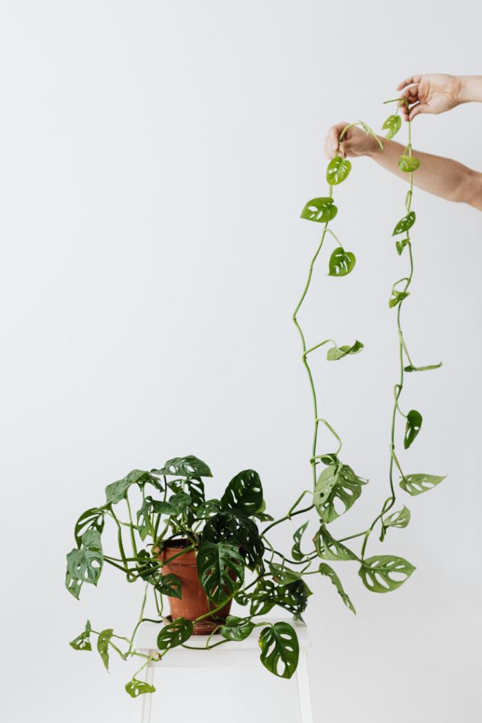 Unkomplizierte Zimmerpflanzen – die schönsten Pflanzen | Tipps & Ideen